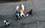 Почему собаки нападают на людей – причины агрессивного поведения