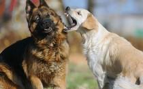 Виды агрессии у собак – на что питомцы реагируют агрессивно?