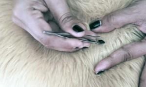 Чем лучше обработать собаку от клещей: комплексная защита от паразитов