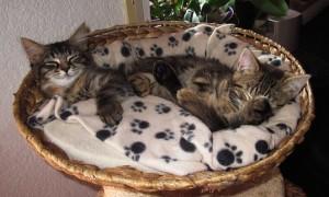 Аксессуары и игрушки для котенка