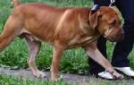 Как исправить поведение собаки?