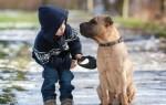 Почему собака напала на ребенка – причины агрессии к детям