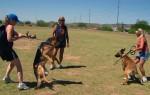 Как отучить собаку кусать руки и проявлять агрессию