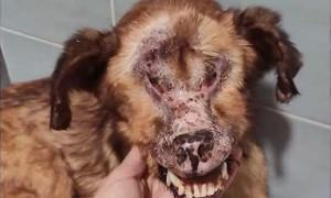 Собака без лица: ужасная история со счастливым концом