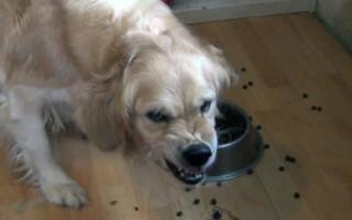 Собака стала агрессивной – причины смены поведения