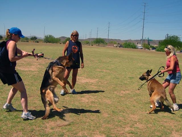 Тренировка псов
