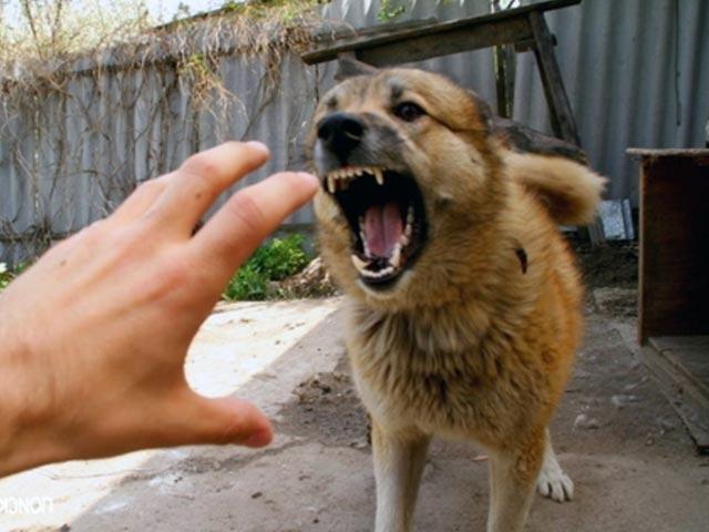 почему собака кидается на хозяина