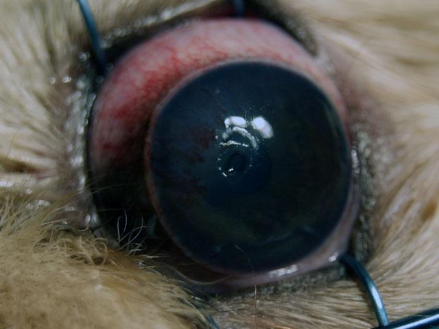 Поверхностная язва глаза