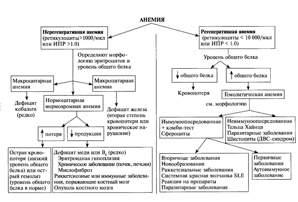 диагностика анемии кошек: блок схема