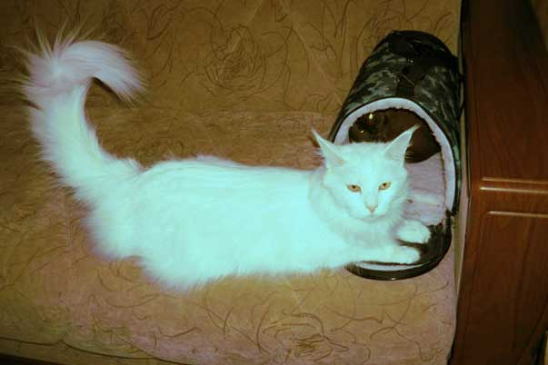 переноска для кошки