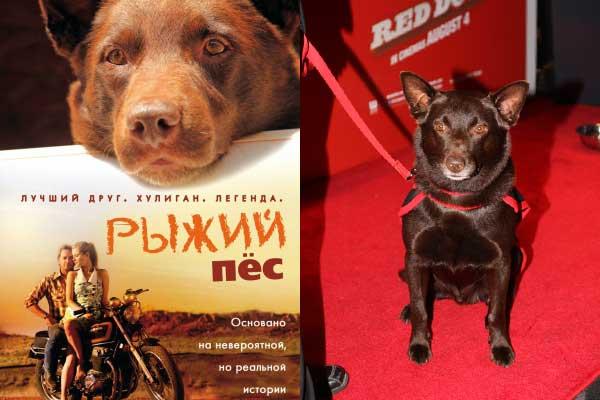 фильм Рыжий пес